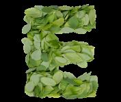 Summer-leaves-font-letter-E